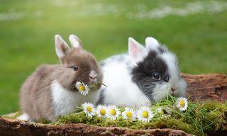 [Translate to en:] Osterhasen mit Blumen in einer Wiese